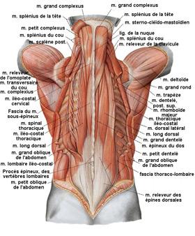 Les douleurs au dessous du ventre et le dos 35 semaine